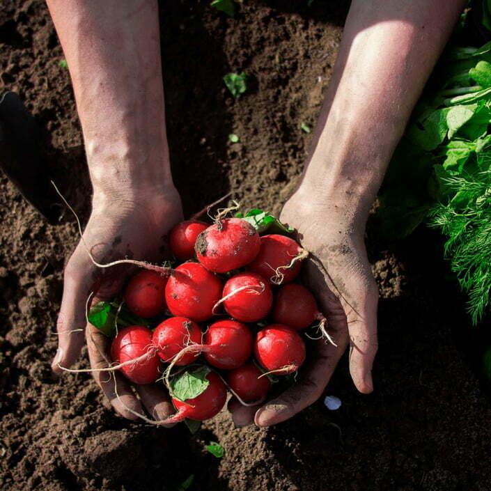 Gartentipps- und -tricks